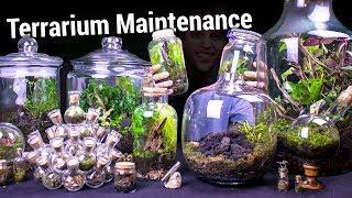 venus-flytrap-terrarium-update-maintenance