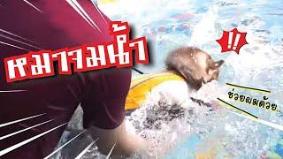 ลองใจหมา-6-หมาว่ายน้ำได้ทุกตัวมั้ย-จมน้ำครั้งแรก