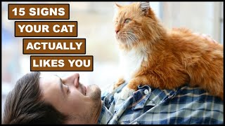 15 Surprising Signs Your Cat Actually Likes You | Animal Globe