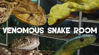 Download lagu Ryan Soobrayan Interview A tour of his snake room MP3