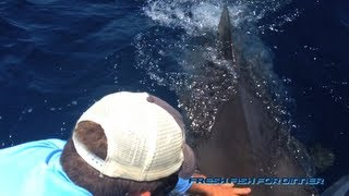 Massive Tiger Shark nearly severs fisherman's hand!