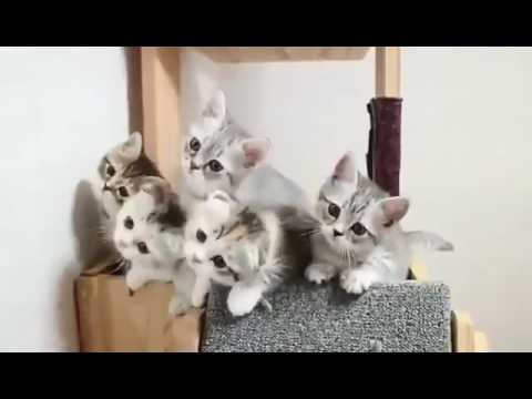 Funny Cat Kucing Nyanyi Lagu Despacito Youtube