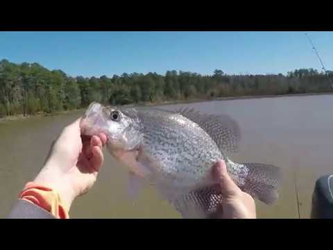 Clarks Hill / Strom Thurmond Lake: Longlining for Spring Crappie 2-27-2018