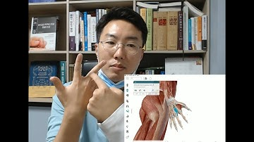 손가락 통증 혼자 치료하기   해부학 공부