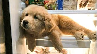 Cute baby animals Videos Compilation cutest moment of the animals - 🐶 Cutest Puppies #9 🐶