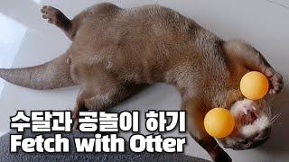 수달과 함께하는 공놀이, 역시 강아지였어|Fetch with Otter, Are You Dog?
