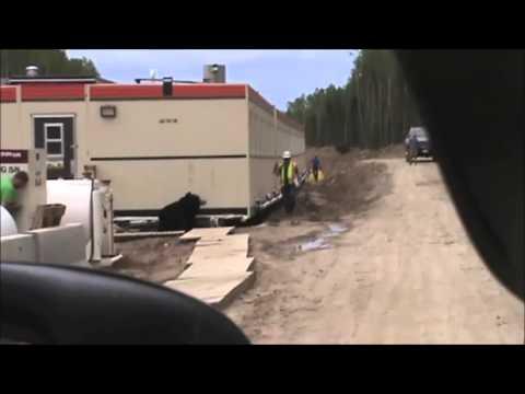 Oilfield Bear Prank