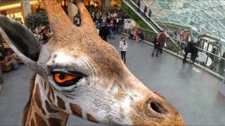 Virtual Zoo in a Japan mall