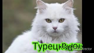 5 древних пород кошек.1 часть