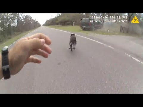 Pasco County Deputy Deploys K9 On Fleeing Driver