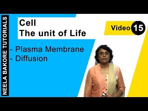 Cell - The Unit Of Life - Plasma Membrane - Diffusion
