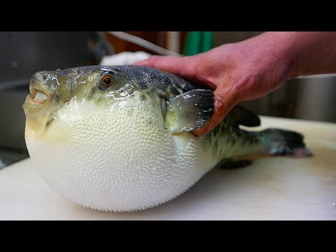 Japanese Street Food - LIVE FUGU PUFFERFISH Puffer Fish Japan
