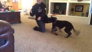 Teaching Your Dog To Jump In Your Arms