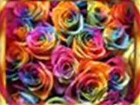 son-12-rosas-q-hablaran-por-mi---lorenzo-antonio