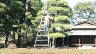 皇居東御苑の植木職人 thumbnail