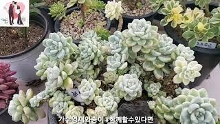 #다육이농장#가수영재와송이(이영재.만송이)#함께할수있다…