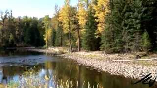 Leaves are falling the beauty of fall - Canada - YouTube