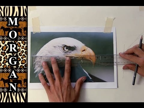 How to Transfer a Drawing or photo to Canvas for Painting - Jason Morgan Wildlife Art