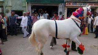 Horse dancing in nawalgarh Jhunjhunu Part=2