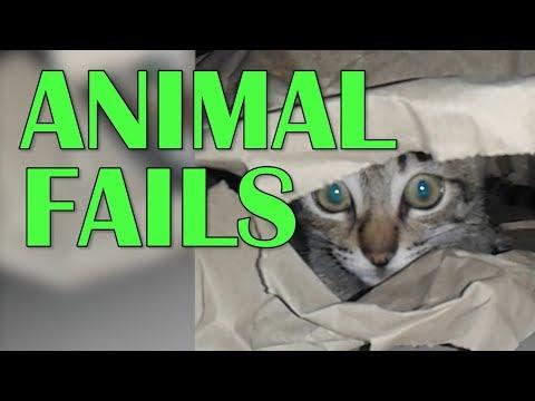 Animal Fails Compilation || Funny Animal Videos