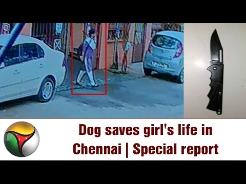 Dog saves girl's life in Chennai | Special report