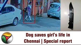 VISUALS | 2 Dog Saves Girl's Life in Chennai