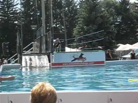 SIBERIAN HUSKY DIVING with ONTARIO DOCK DOGS