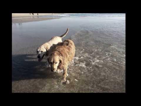 Huntington Dog Beach Surf City USA