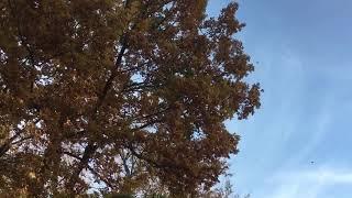 Осень/ Листопад/ Закат/