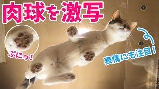 【肉球好き必見】禁断のアイテムを使って猫を下から撮影してみた!