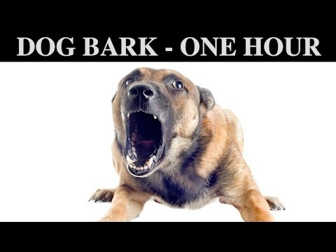 Sound Effects Of Dog Barking | ONE HOUR | BARK | GROWLING | CRY | PUPPY | WHINING | HQ