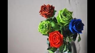 Долгосвежая вечная роза в подарочной упаковке обзор