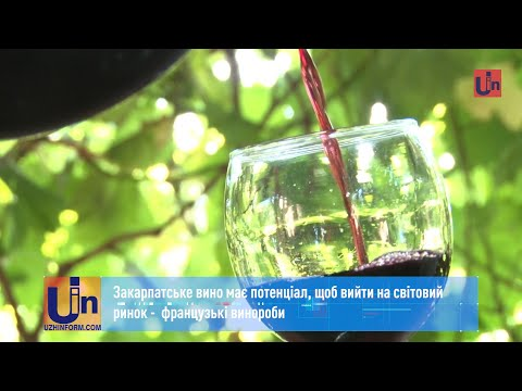 Закарпатське вино має потенціал, щоб вийти на світовий ринок, – французькі винороби