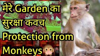 How to Keep Monkeys Away From Garden, बंदर को Terrace Garden से केसे दूर रखे