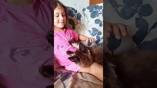 Котик мейнкун 2,5 месяца, открыто резервирование