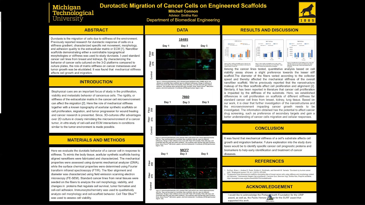 Preview image for Durotactic Migration of Cancer Cells on Engineered Scaffolds video