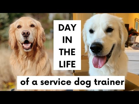 QUARANTINE Day in the Life of a Dog Trainer
