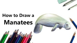 How to Draw a Manatees with Color Pencils [Time Lapse]