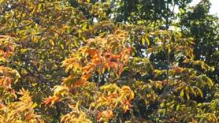 ALIENS IN THE TREES, A BALANCED VIEW FROM SUPERMUSHMOUSE, 07.1010@8AM.WMV