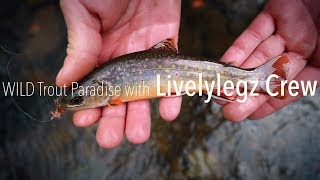 WILD Trout Paradise with Livelylegz Crew | Our First Colab