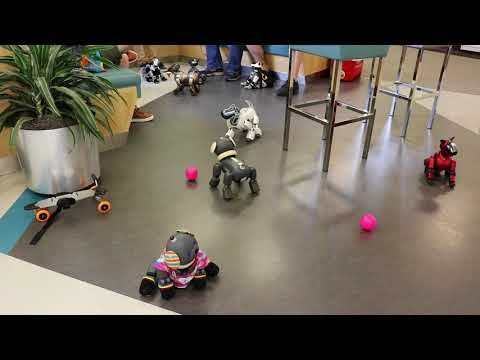Sony Aibo Midwest Meetup 2018