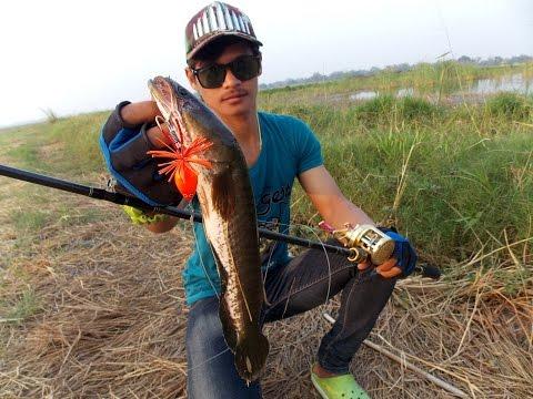ตกปลาช่อนกลางนา Kajidrit By..LF