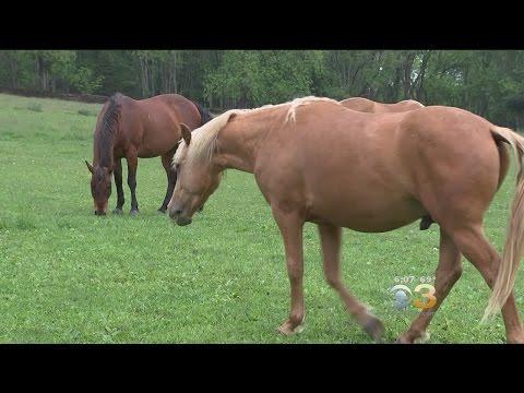drug rehab with horses