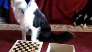 Talin chess