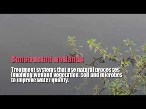 How South Delhi's biggest water body Restored Using Natural Process, Reviving Neela Hauz,