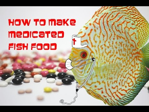 How to make medicated fish food for discus to treat for for Discus fish food
