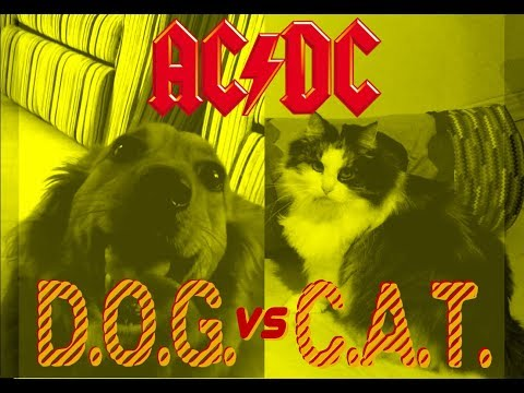 Dog vs Cat - ACDC - TNT reggae cover