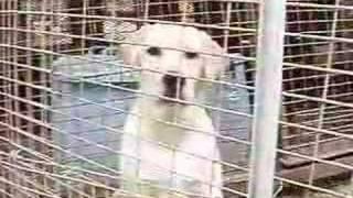 1月3日生まれのラブラドールレトリバーのメス1頭です。 http://www.wanw...