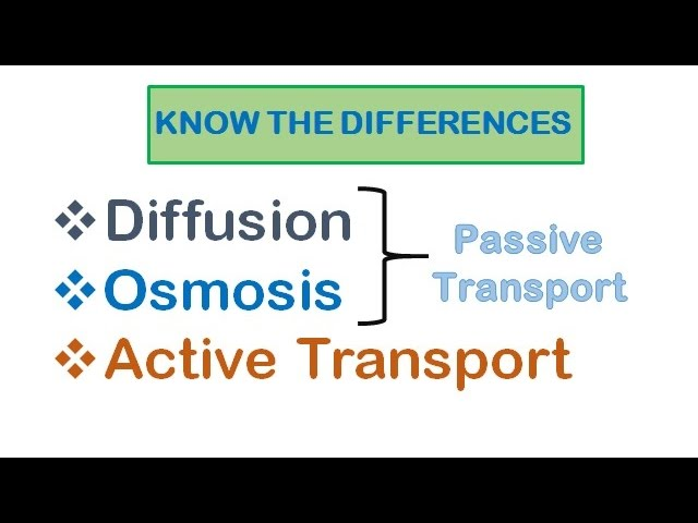 Cell Transport Diffusion Osmosis Active Transport Youtube