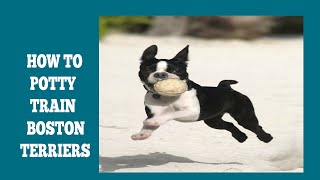 How To Easily Potty Train Boston Terriers